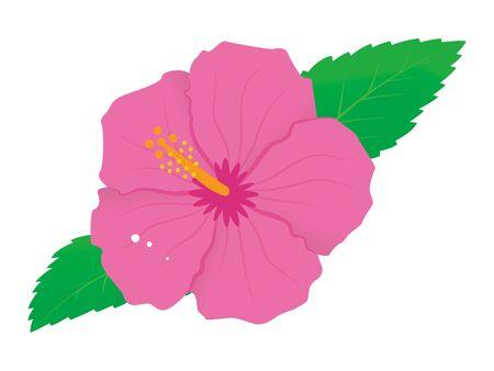 Vector illustration of vivid hibiscus flower