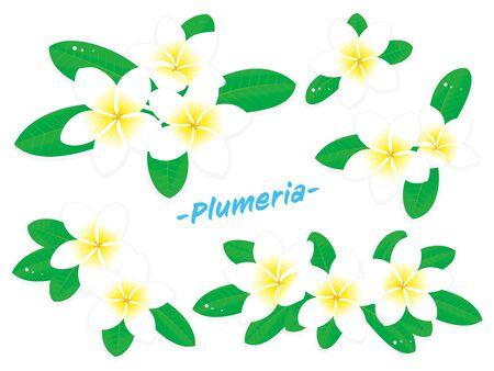 Vector illustration set of white plumeria flower Ilustrace
