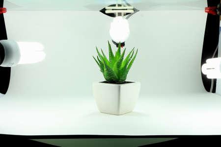 A capture of mini studio for tke a photo of fake plant Stock fotó