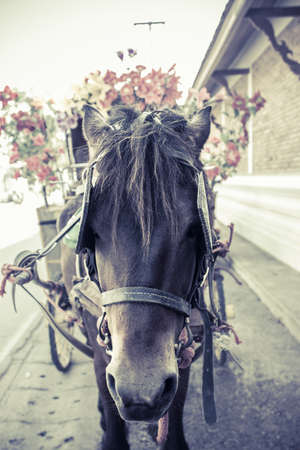 hackney carriage: Portrait of a horse on a buggy