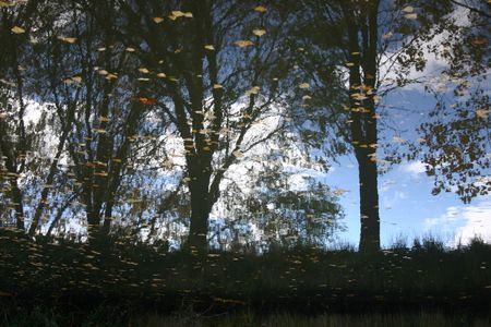 sky and trees reflected in calm water Stock Photo - 674981