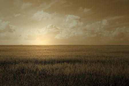 lush green wheat field with cloudy blue sky Stock Photo - 1354563