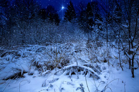 jesus birthday: Christmas night landscape with the Christmas star.