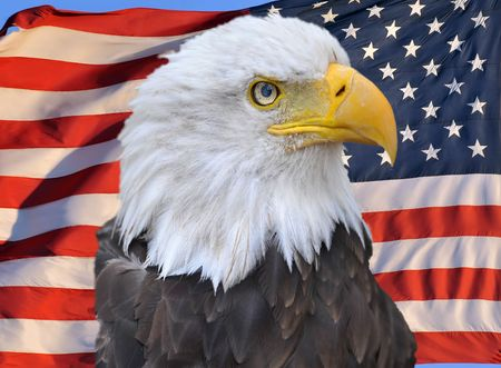 proud looking american bald eagle superimposed on american flag