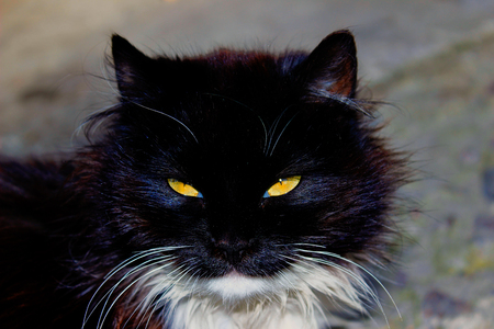 watching horror: Static portrait of a black cat with yellow eyes Foto de archivo