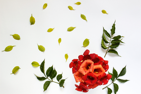 calico: Simple cute pattern in small-scale red flowerswith green leaves on a white background . view from above Stock Photo