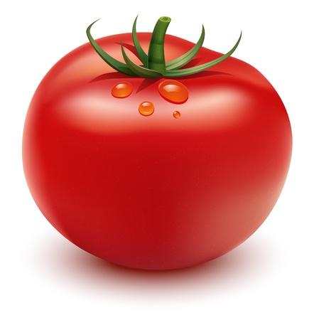 Vector red tomato