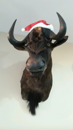 Taxidermy moose waiting for Christmas. Stock Photo