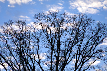 Blue sky background accents a winter tree