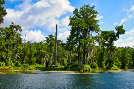 Drifting Down a River in Wakulla Springs State Park Florida