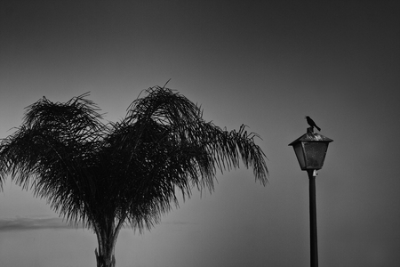 Dramatic Scene of a Sparrow and the Palm Stock Photo