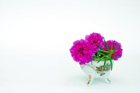 flores fucsia: Flores fucsias en un florero
