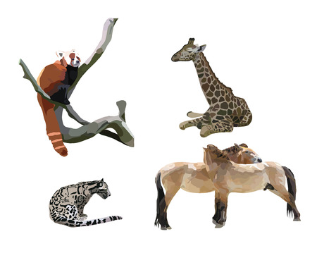 untamed: feline, giraffe, Przewalskis horse, small panda on a white background