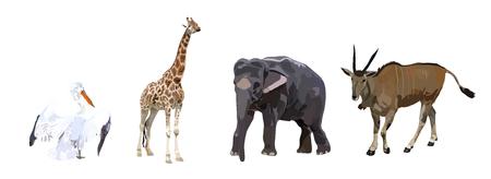 antelope: Pelican, antelope, elephant and giraffe on a white background