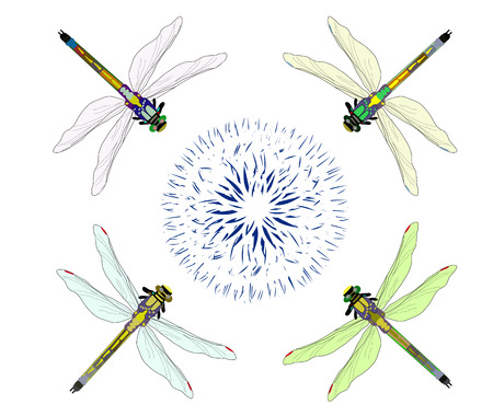 macro nature: Four dragonflies flying on an abstract flower on a white background