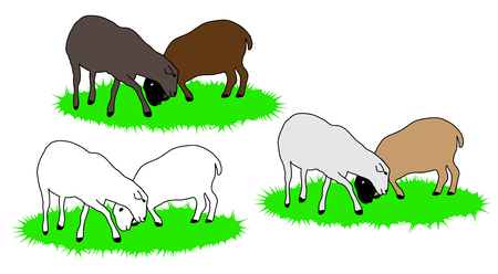 White, gray and brown sheep grazing on grass