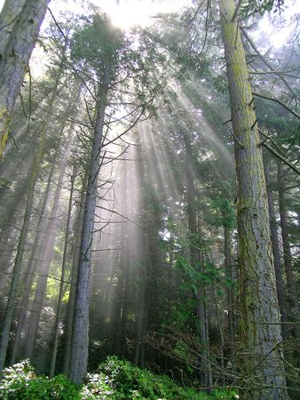 shafts: Sunbeam Rainforest Stock Photo