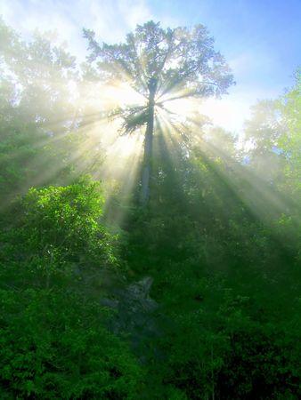 Lush Sun Beams Zdjęcie Seryjne - 336543