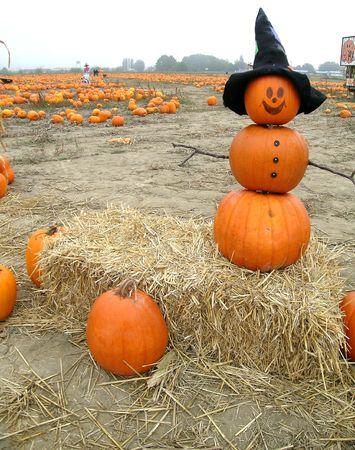 Mr. Pumpkin is outstanding in his field Stock Photo