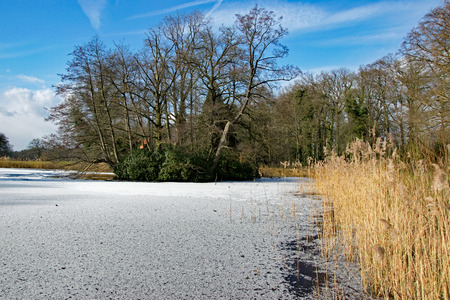 A thin layer of snow on the ice of the forest pond, the bare trees and the yellow reed collar complete a winter landscape.