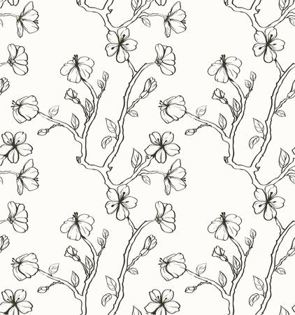 sakuras: Sakura en el fondo blanco