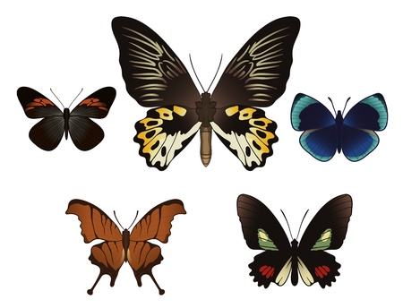 Set of butterflies isolated on white background. Vector