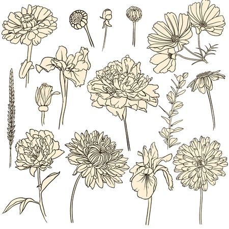 white lilly: Set of hand drawn flowers