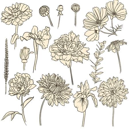 zwart wit tekening: Set van hand getrokken bloemen Stock Illustratie