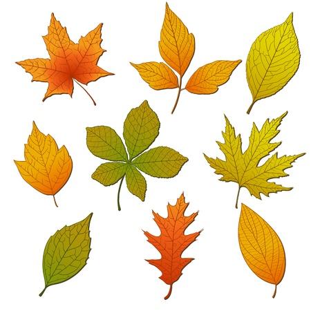 Set van kleurrijke herfstbladeren Stock Illustratie