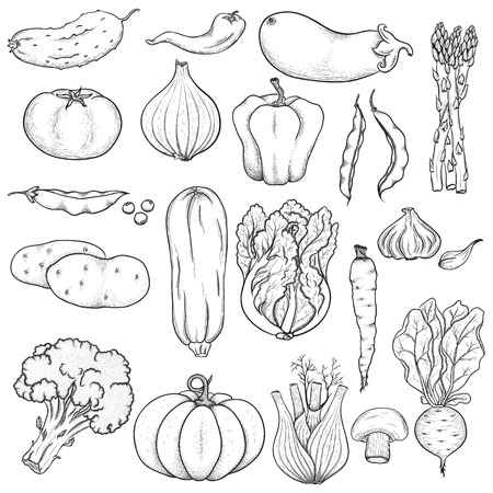 Big collection of hand drawn vegetables. Black on white background. Sketch.