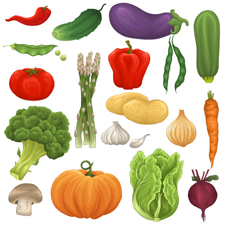 Set of colorful fresh and tasty vegetables Vector