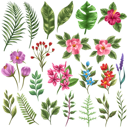 Set of traditional and tropical flowers and leaves Vector