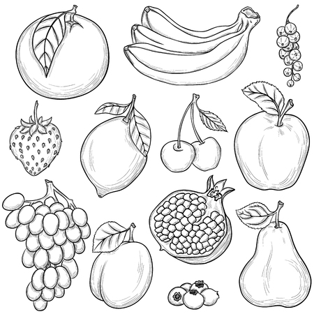 black grape: Set of sketched fruits isolated on white background