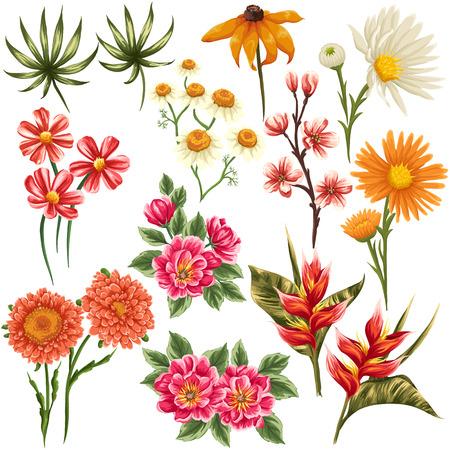 伝統的な熱帯の花や水彩画のような様式化された葉のセット  イラスト・ベクター素材