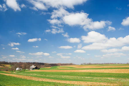 cultivated: Idyllic rural scene of wide open cultivated farmland and an old barn with a deep blue sky and cottony clouds.
