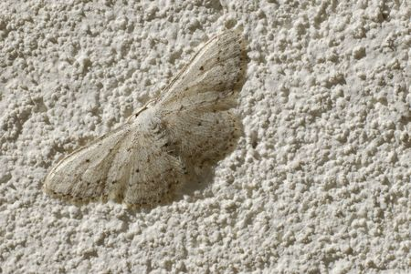 White, Small Butterfly on a white wall photo