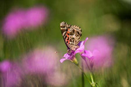 butterfly garden: Pink flowers with butterfly garden in backyard