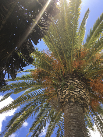 surfen: Palm sourrounded by Blue Sky on a nice sunny Day