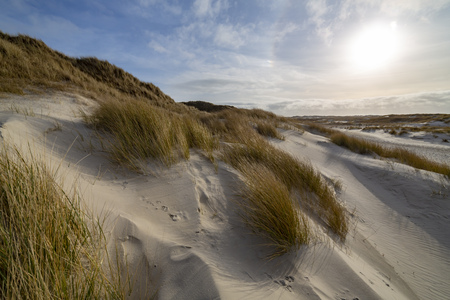 Hardy marram grass on pristine white sand dunes backlit by a hazy sun in an idyllic scenic landscape on Amrum, North Frisia, Germany in a travel destination concept