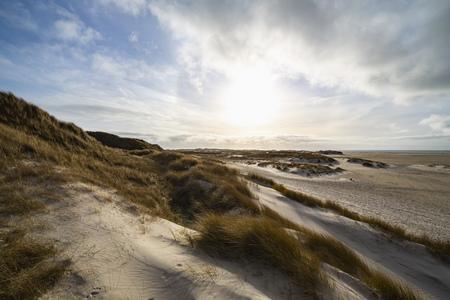 Hardy marram grass on coastal sand dunes backlit by an atmospheric blue cloudy sky on the Island of Amram, North Frisia, Germany