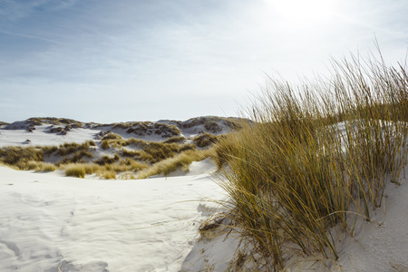 White sand coastal dunes with marram grass overlooking the beach backlit by a cloudy blue sky in a scenic landscape at Amrum in the North Frisian Islands, Germany