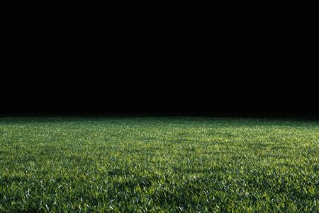 Low angle view across the neatly cut green grass of a lawn or sports field in shadowy evening light for use as a background image