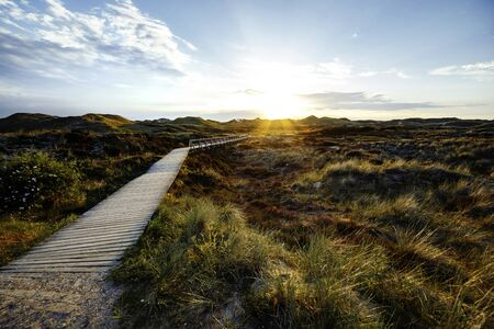 Sundown over dense green bush on coastal dunes with boardwalk leading to calm Sunset with glowing sky on a moody evening. Landscape on Amrum, North Frisian Islands, Schleswig-Holstein, Germany Фото со стока