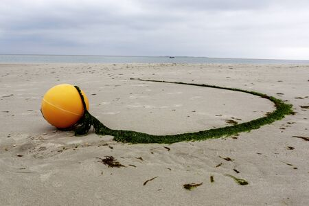 Yellow marker buoy with trailing rope covered in green seaweed trailing away in a curve on beach sand in a low angle view