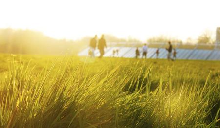 ourdoor: grassland at sunset