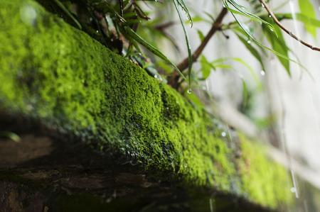 lichen: lichen in wall Stock Photo