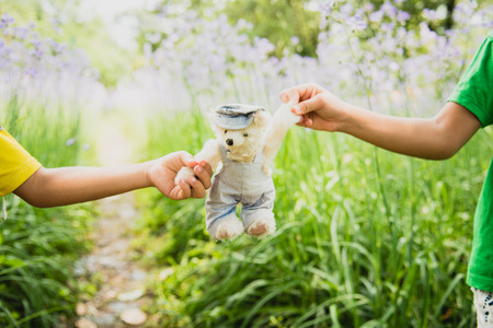Vibrant outdoor photo of teddy bear sitting on the yard at the park with the white flower and green grasses