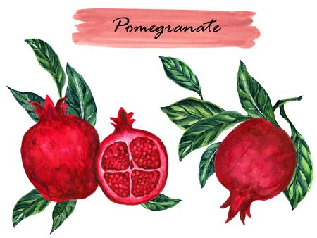 Watercolor healthy collection vintage pomegranate with branch foliage composition. isolated on white background botanical illustration for design hand paint