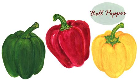 Watercolor botanical  illustration Red Green Yellow sweet Bell Pepper on white background hand paint