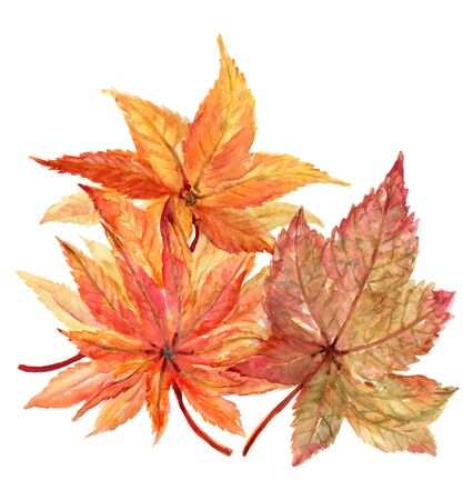 Fall Autumn maple leaves plants red orange leaves differnt elements watercolor illustration isolated on white background